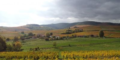 Types of wine soil