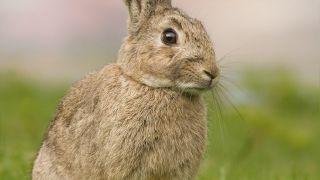 Sous Vide Rabbit